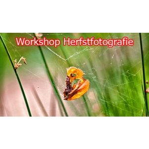Workshop Herfstfotografie