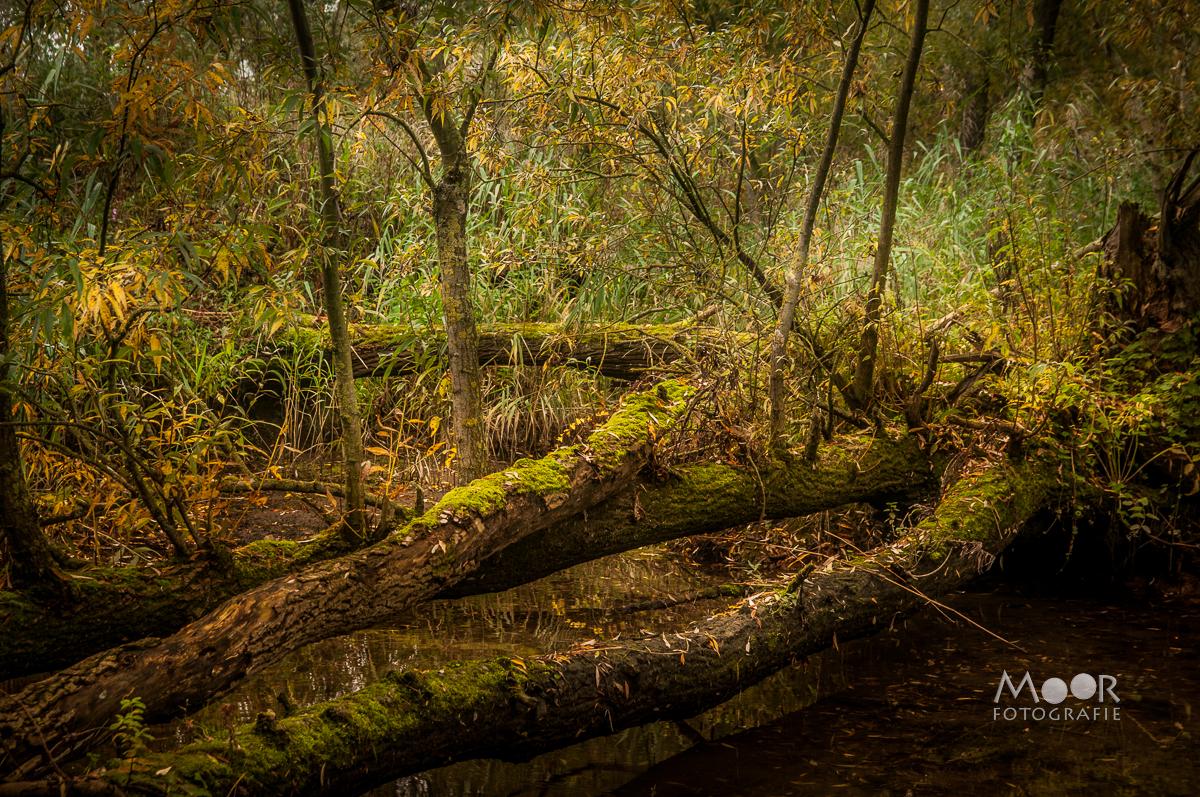Natuurfotografie in de Biesbosch